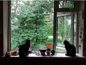 Cats at a study window