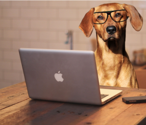 Dog wearing glasses by a computer