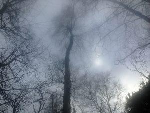 Arnside Woods