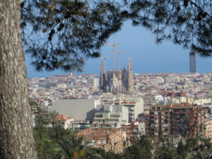 A picture of Barcelona, with a tree framing a view across the city and the Sagrada Familia
