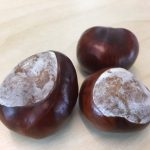 Picture of conkers