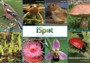 iSpot, your place to share nature