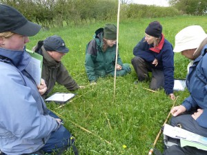 Volunteers learning plant identification in a floodplain meadow