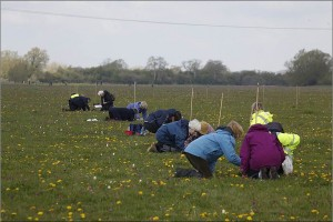 Volunteers counting Snakeshead Fritillaries in 2012. Photo credit: Mike Dodd