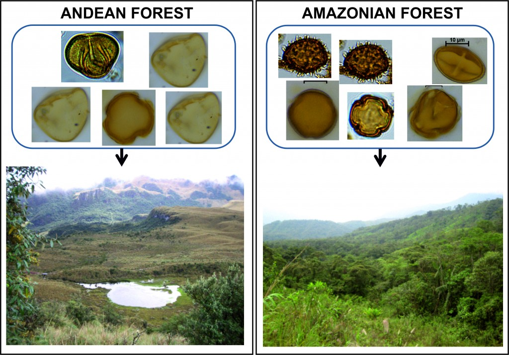 Figure 4. Tropical forests (Left: Andean highlands; Right: Amazonian rainforest) and the different pollen assemblages that characterise them.