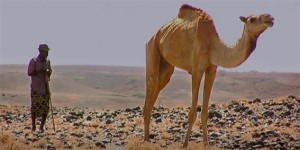 Development of the World's First Insurance for African Pastoralist Herders. Click link to view film. Length:  12 minutes.