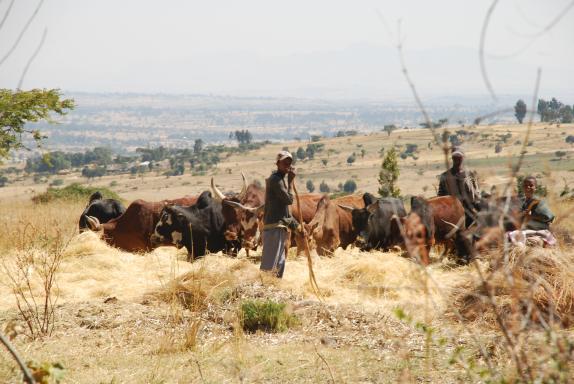Slideshow 3 Rural Life In Ethiopia Heat Programme