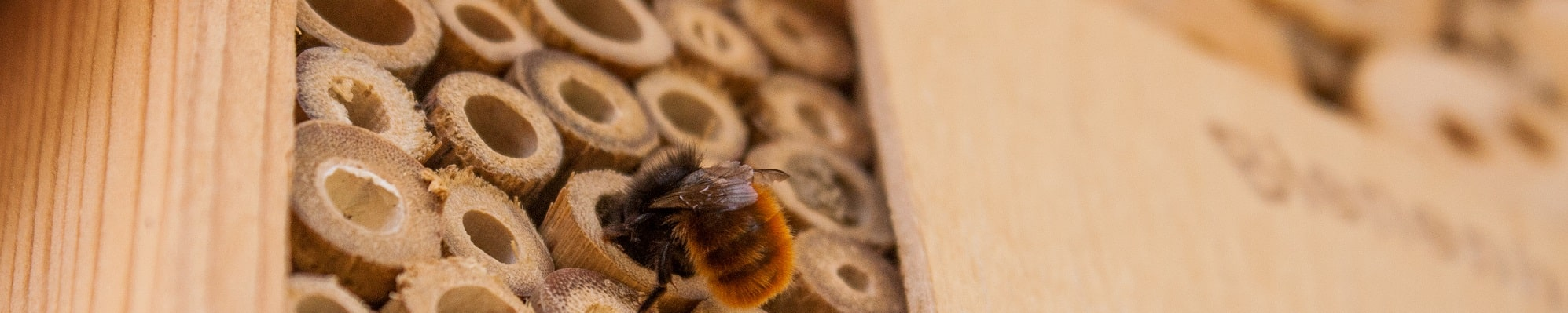 Bee investigating a bee hotel