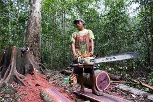 Makushi logging image
