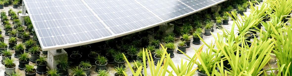 Image of solar panels and growing plants