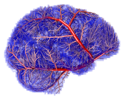 Image shows the computational model of the brain arteries
