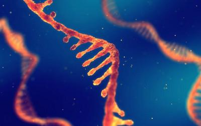 Some long non-coding RNAs make it easier for cancer cells to multiply. nobeastsofierce/ Shutterstock