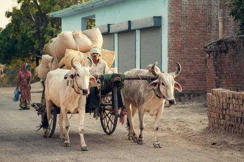 Shutterstock-289745486 - Indian ox and cart