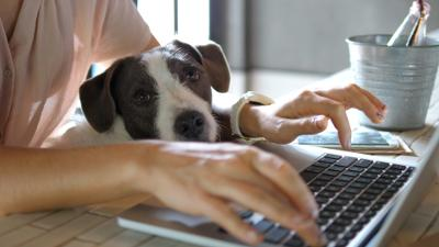 Woman working on a laptop with a dog