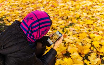 Person taking a photo of leaves with mobile phone