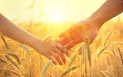 Couple taking hands and walking through golden wheat field with beautiful sunset