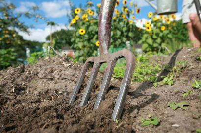 Shutterstock 309545528 Digging an allotment