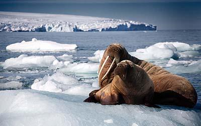A still image from Blue Planet II