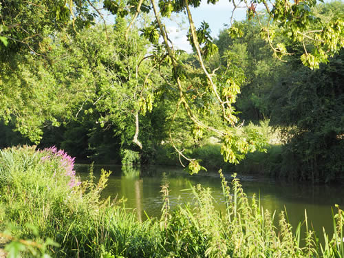 River with trees and vegetation growing along the banks.